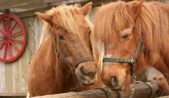 pferdeversicherungen