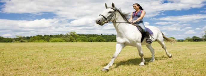 pferde kosten versicherung